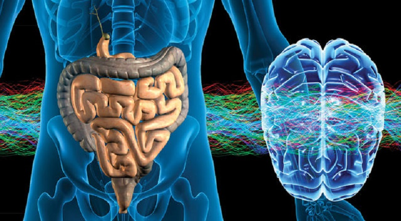 """The """"Second Brain"""" – The Gut-Brain Link Influences Memory And Learning"""