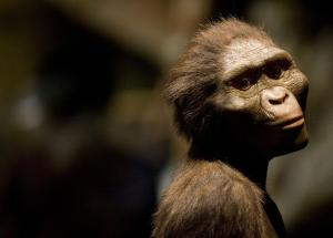 4-Million-Year-Old Hominin Cranium Resembles That Of The Modern Human