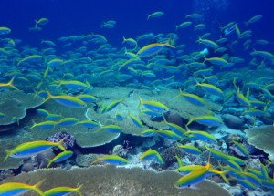 Rat Infestation Poses a Threat to Coral Reefs in Oceanic Islands