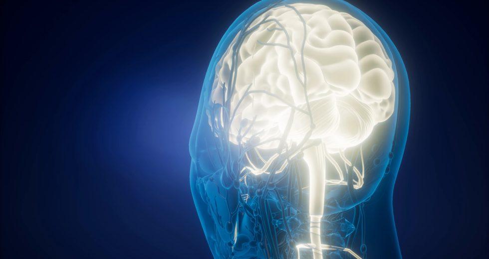 Genetic Makeup And Individual Life Experiences Produce A Unique Brain Anatomy Like Fingerprints