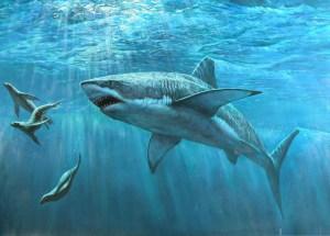 Mega-Shark Teeth Of 25-Million-Year-Old Found On Australian Beach