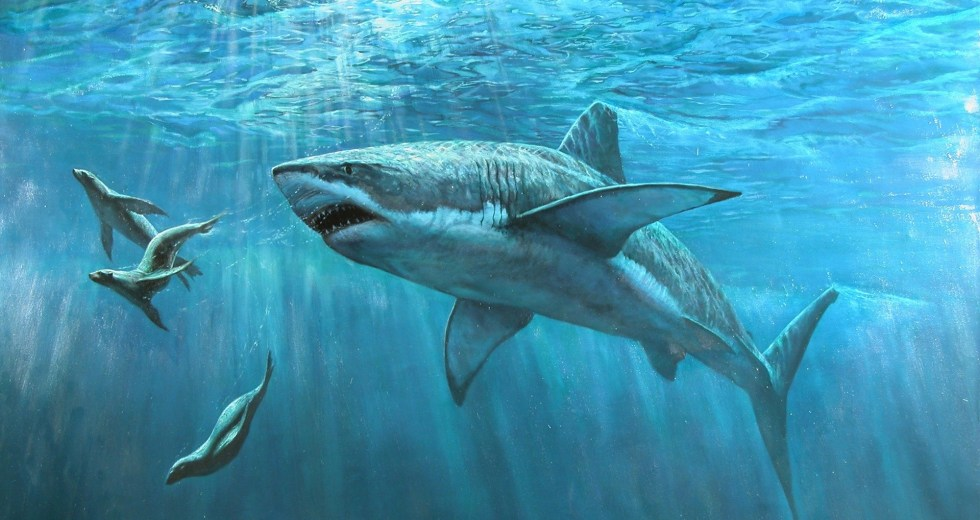 Sharks Were Almost Wiped Out By Event Twice as Devastating as the One That Killed the Dinosaurs