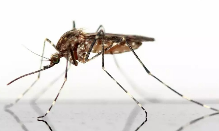 Mosquitoes In Assiniboia Area, Saskatchewan, Found Positive For West Nile Virus, The Health Officials Warn