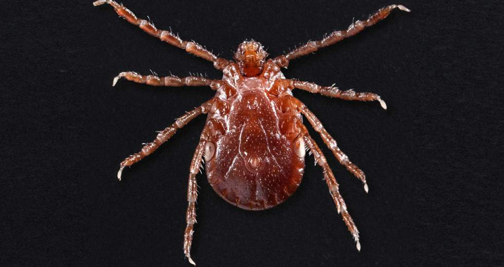 "Potentially Deadly Tick Spreads Across The US – ""We're Losing This Battle,"" CDC Warned"