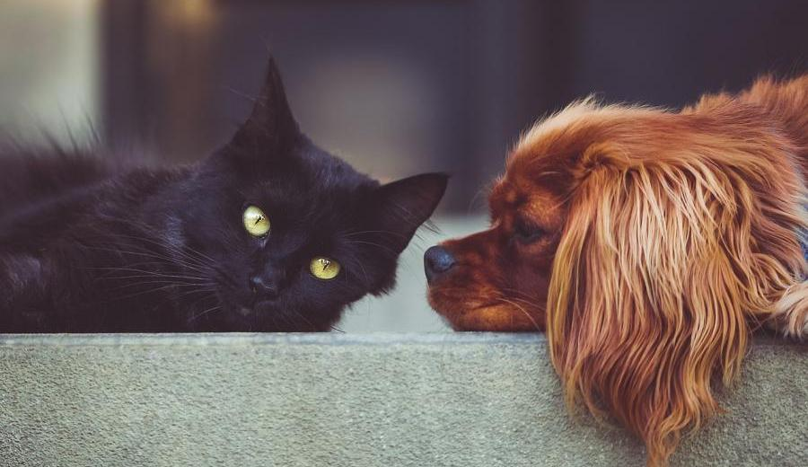 CBD Oil for Dogs and Cats: 6 Considerations Before Giving This To Your Pets