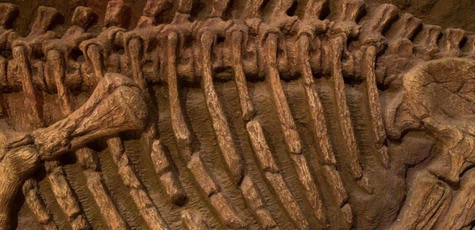 """""""The Antarctic King"""" Is An Ancestors Of Dinosaurs – What Is He Exactly?"""