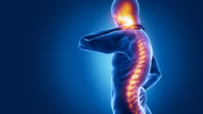 The Spinal Cord Controls More Complex Functions Than Scientists Knew, A New Study Showed
