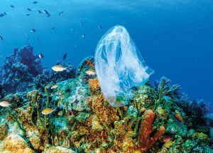 Coral Reefs Are Now In Danger Of Getting Diseases Caused By Plastic Pollution In The Oceans