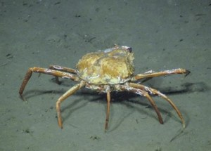 Crabs Adapt To Climate Change By Feeding On Methane