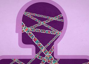 Genetics Influences The Risks Of Autism
