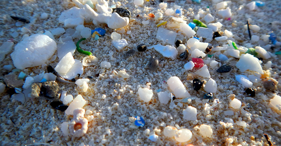 WHO Calls For Urgent Research On Microplastics