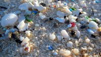 Microplastics: The Dangers of Bottled Water