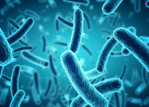 Evolutionary Adaptations Trigger Different Gut Microbiome