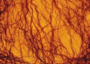 Scientists Created The First Molecular Map Of Tissue