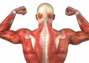 Top 5 Ignored Muscles in the Human Body