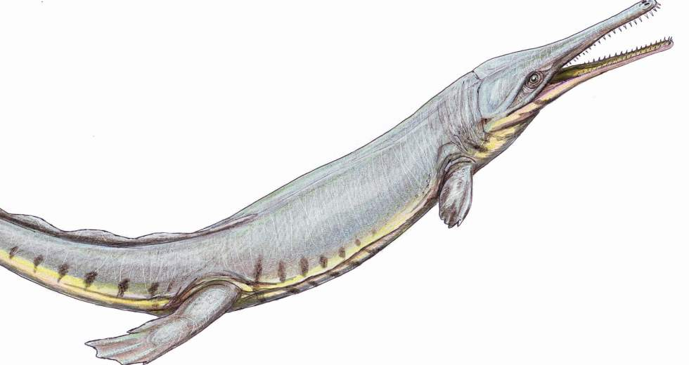 Ancient Crocodile Was Mimicking The Adaptation System Of Whales