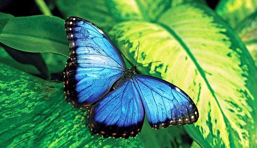 Butterfly Wings Change Colors, According to a New Study