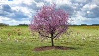 A Single Cherry Tree Can Absorb 20 Pounds Of Carbon Emissions Per Year