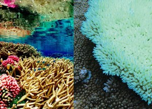 This Is What Kills Half The Corals On The Great Barrier Reef