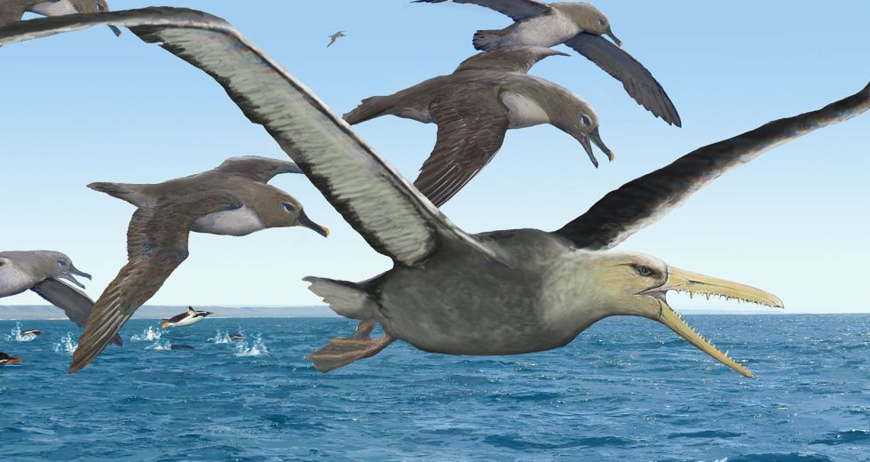 Study: This Is the Biggest Flying Bird Ever