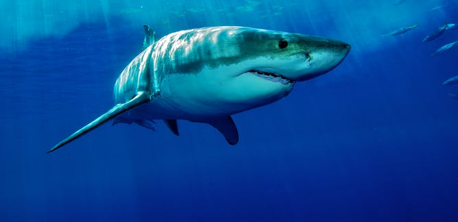 Scientists Prove How Technology Can Save Humans From Shark Attacks