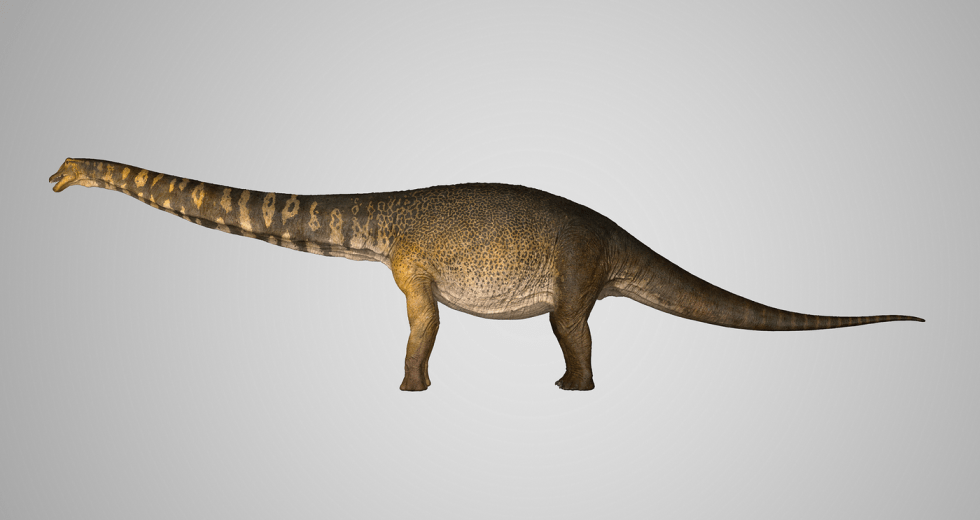Newly Found Australian Dinosaur Species – Australotitan, 70 tons and up to 98 feet in size