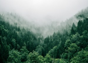 Planting More Trees Will Boost Summer Rains Across Europe, New Study Finds