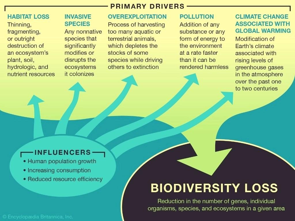 how human life impacts biodiversity
