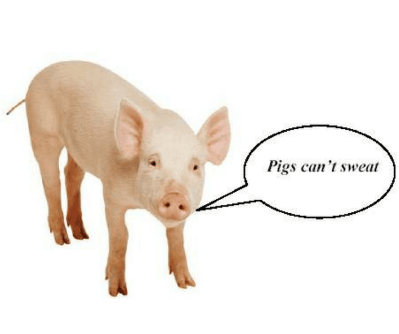 Is pork meat healthy to eat