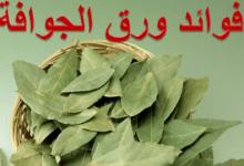Photo of الفوائد الرهيبة لا وراق الجوافة في علاج العديد من الامراض