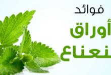 Photo of فوائد النعناع في التخسيس