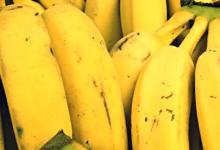 Photo of كميه البروتين في الموز