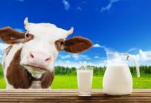 Photo of موسوعة فوائد الحليب الكاملة