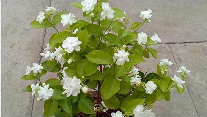 Natural Air Purifier Plants