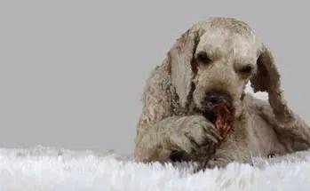 Medium Chewer Dog Treats