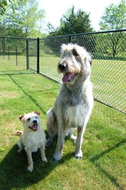 Bugsy and Fin Helped by MSE Natural Defense Probiotic Supplement