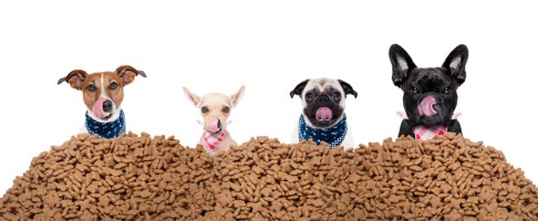 Dogs Happy with Flint River Ranch Dog Food