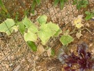GreenMaxPro Helps Plants