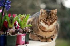 Cat Sitting in Yard by Plants