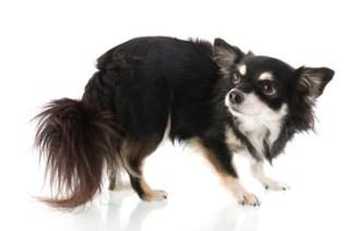 fearful dog on july 4th