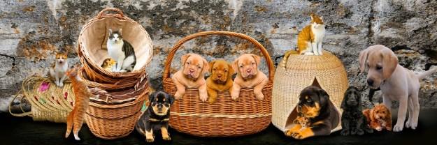 10 of the Friendliest Dog Breeds