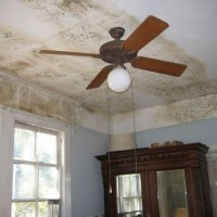 Guest Post: 5 Natural Solutions for Household Mold