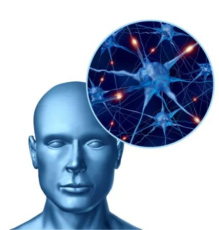 How does CBD work in the brain