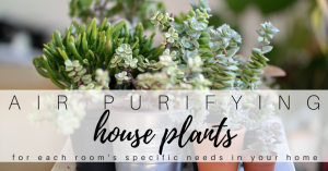 Air Purifying House Plants for Each Room of Your House