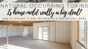 Is House Mold Really a Big Deal?