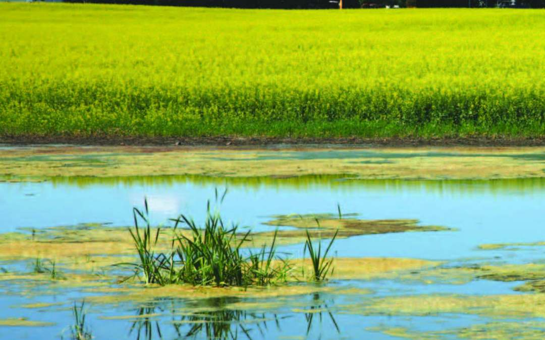 Cultivating Restoration: How Farm Bill Conservation Programs Help Heal Our Great Lakes