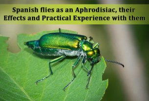 Spanish Flies as an Aphrodisiac