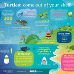 REVISED_turtle_infographic