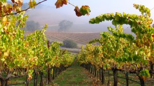 Paso Robles Wine Festival, Healthy Living + Travel
