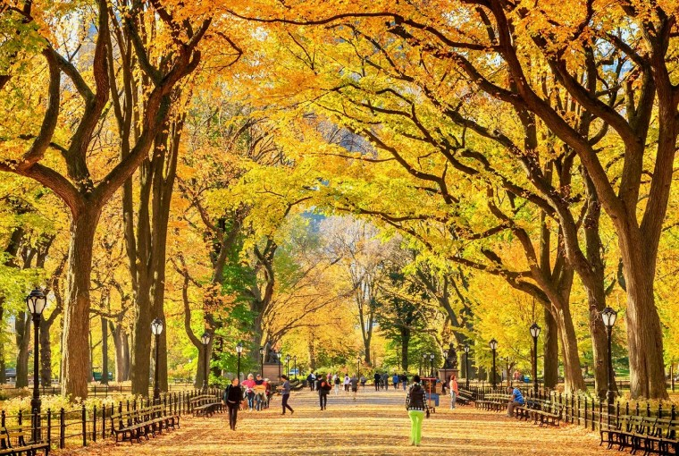 Central Park, New York City, Healthy Living + Travel